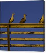 Sunset Seagulls Canvas Print