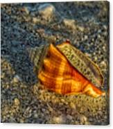 Sunset Seashell Canvas Print