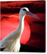 Sunset Stork Canvas Print