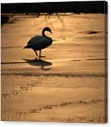 Sunset Swan Canvas Print