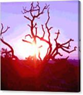 Sunset Through Silhouetted Tree In Desert 2 Canvas Print