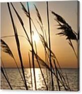 Sunset Through The Dune Grass Canvas Print