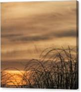 Sunset Through The Seagrass Canvas Print