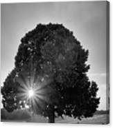 Sunset Tree In Mono Canvas Print