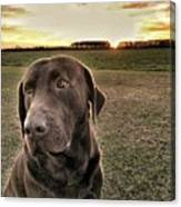 Sunset With My Good Boy Brownie  Canvas Print