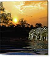 Sunset Zebras At The Watering Hole Canvas Print