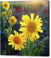 Sunsets And Sunflowers Of Buena Vista 2 Canvas Print