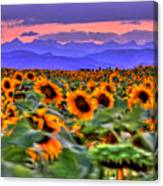 Sunsets And Sunflowers Canvas Print