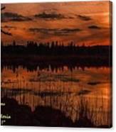 Sunsettia Gloria Catus 1 No. 1 L A. Canvas Print