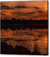Sunsettia Gloria Catus 1 No. 1 L B. Canvas Print