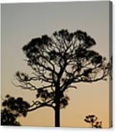 Sunsetting Thru The Trees Canvas Print