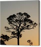 Sunsetting Trees Canvas Print