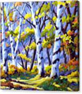 Sunshine And Birches Canvas Print