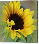 Sunshine Beauty - Sunflower Canvas Print