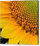 Sunshine In A Flower Canvas Print