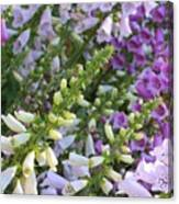 Sunshine On Foxgloves Canvas Print