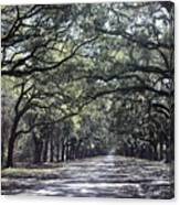 Sunshine On Live Oaks Canvas Print