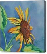 Sunshine On My Shoulders Canvas Print