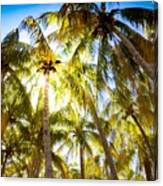 Sunshine Palms Canvas Print