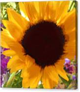 Sunshine Sunflower In The Garden Canvas Print