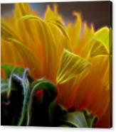 Sunshine Sunflower Petals Two Canvas Print