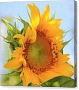 Sunshiney Day  Canvas Print