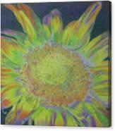 Sunverve Canvas Print