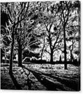 Super Contrasted Trees Canvas Print