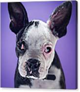 Super Pets Series 1 - Bugsy Close Up Canvas Print