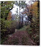 Superior Hiking Trail Canvas Print
