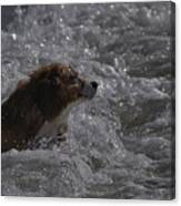 Surfer Dog 1 Canvas Print