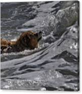 Surfer Dog 2 Canvas Print