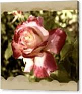 Surprise Rose Canvas Print