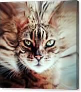 Surreal Cat Canvas Print