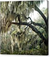 Surreal Gothic Savannah Georgia Trees With Hanging Spanish Moss Canvas Print