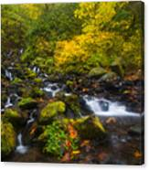 Surrounded By Fall Color Canvas Print