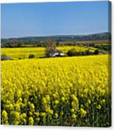 Surrounded By Rapeseed Flowers Canvas Print