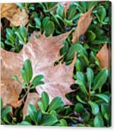 Surrounded Leaf Canvas Print