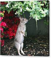Surveying Next Leafy Meal Canvas Print
