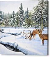 Surviving The Winters Canvas Print