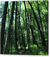 Susan Creek Indian Mound Trail Canvas Print