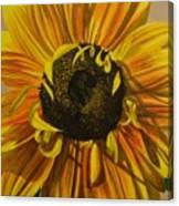 Susanna's Sunflower Canvas Print