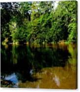 Suwannee River Canvas Print