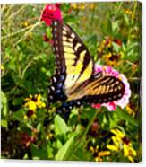 Swallow Tail Butterfly Enjoying The Sunshine Canvas Print
