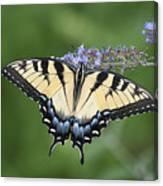 Swallowtail 20120723_24a Canvas Print