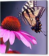 Swallowtail And Coneflower Canvas Print