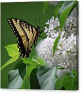 Swallowtail Beauty Canvas Print