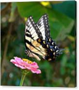 Swallowtail Butterfly 3 Canvas Print