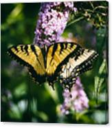 Swallowtail Butterfly At The Maryland Zoo Canvas Print