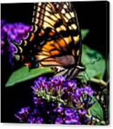 Swallowtail Feasting Canvas Print